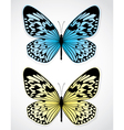 Blue and yellow butterflies vector