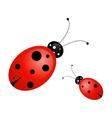 Ladybug vector