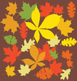 Autumn leaves color vector