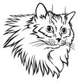 Cat furry mane vector