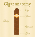 Cigar structure1 vector
