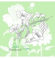 Green background with bindweed vector