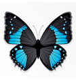 Blue and black butterfly vector