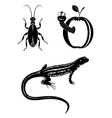 Black design elements - beetle worm lizard vector