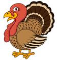 Funny turkey cartoon vector