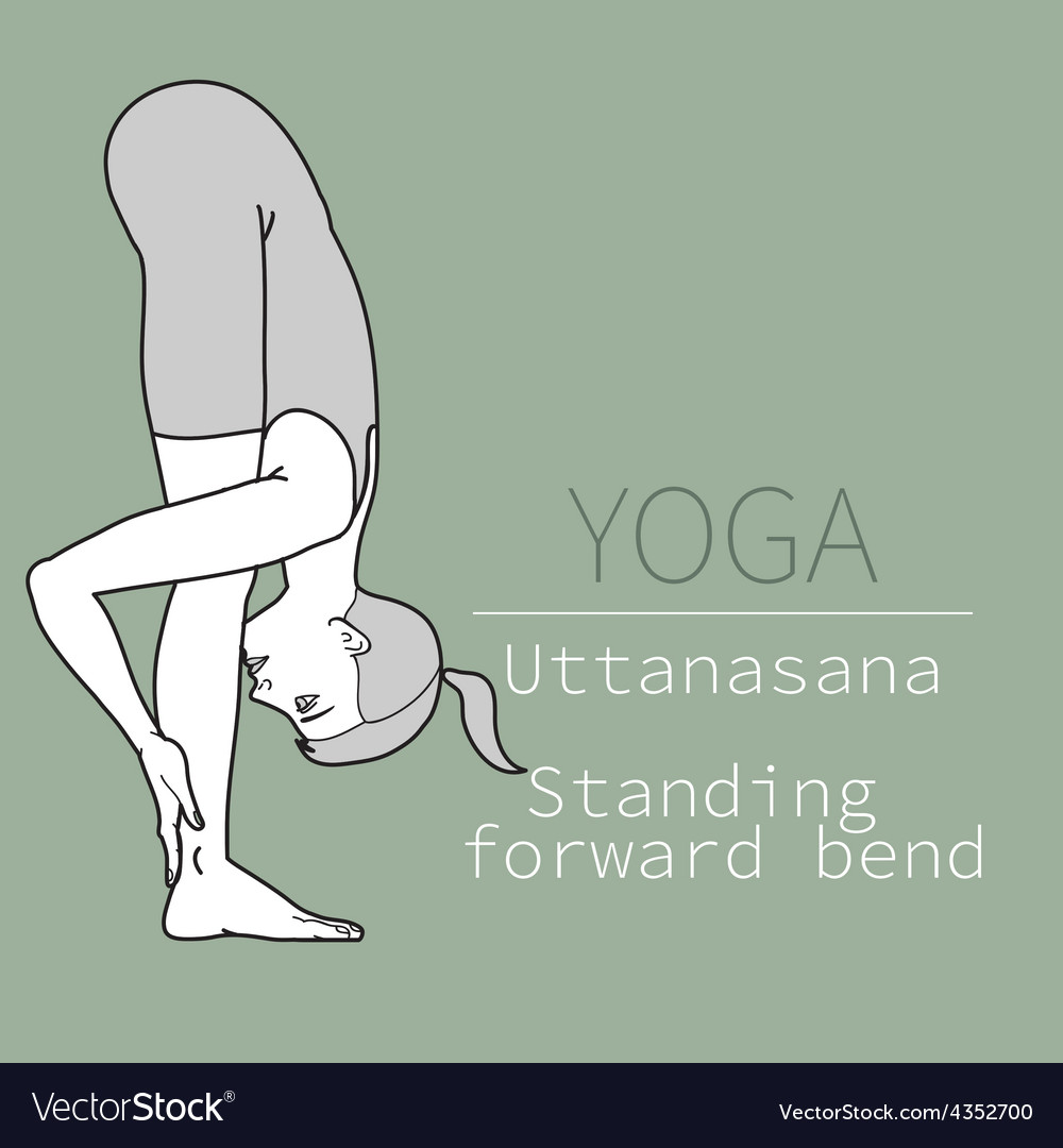 Uttanasana standing forward bend vector | Price: 1 Credit (USD $1)