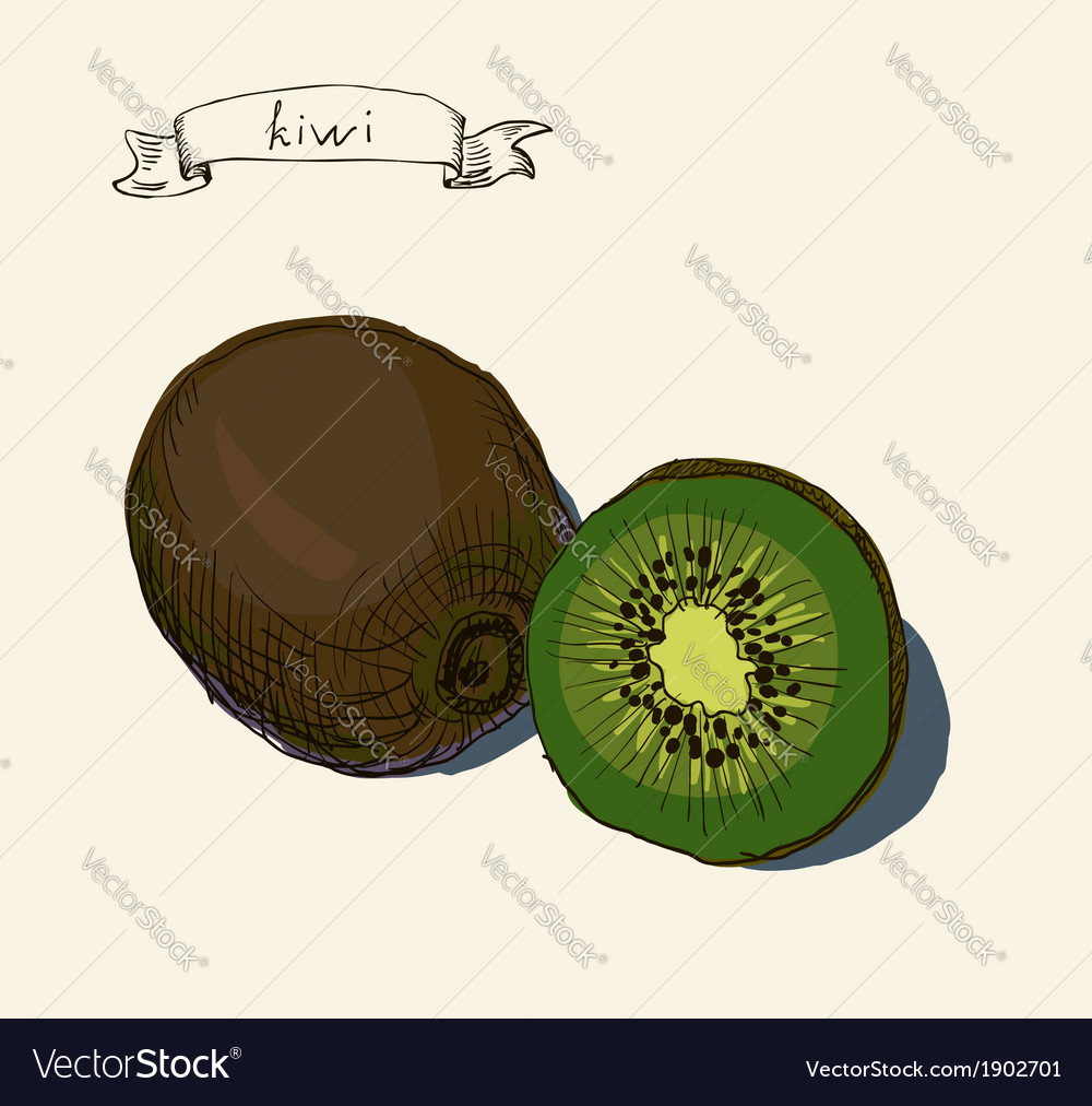 Artistic kiwi fruit vector | Price: 1 Credit (USD $1)