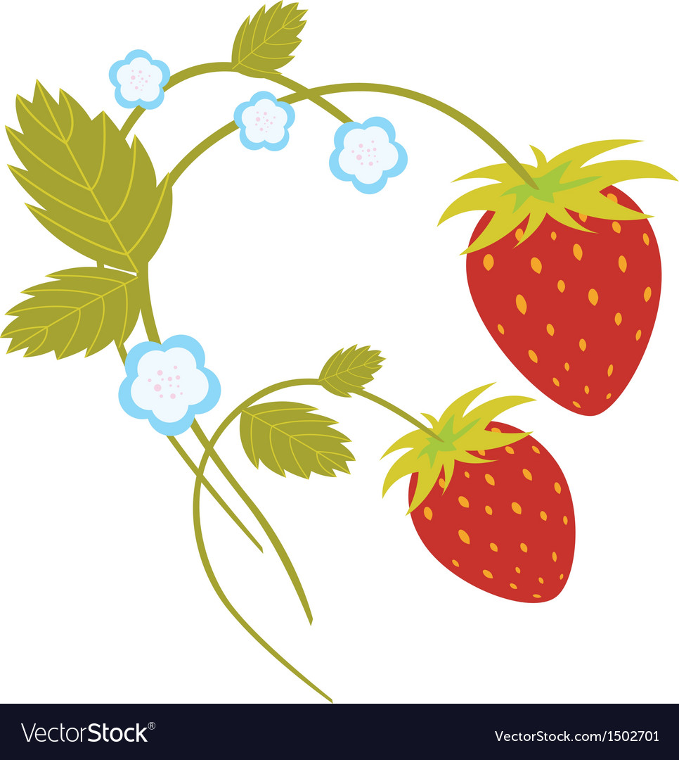 Strawberries with blossom vector | Price: 1 Credit (USD $1)