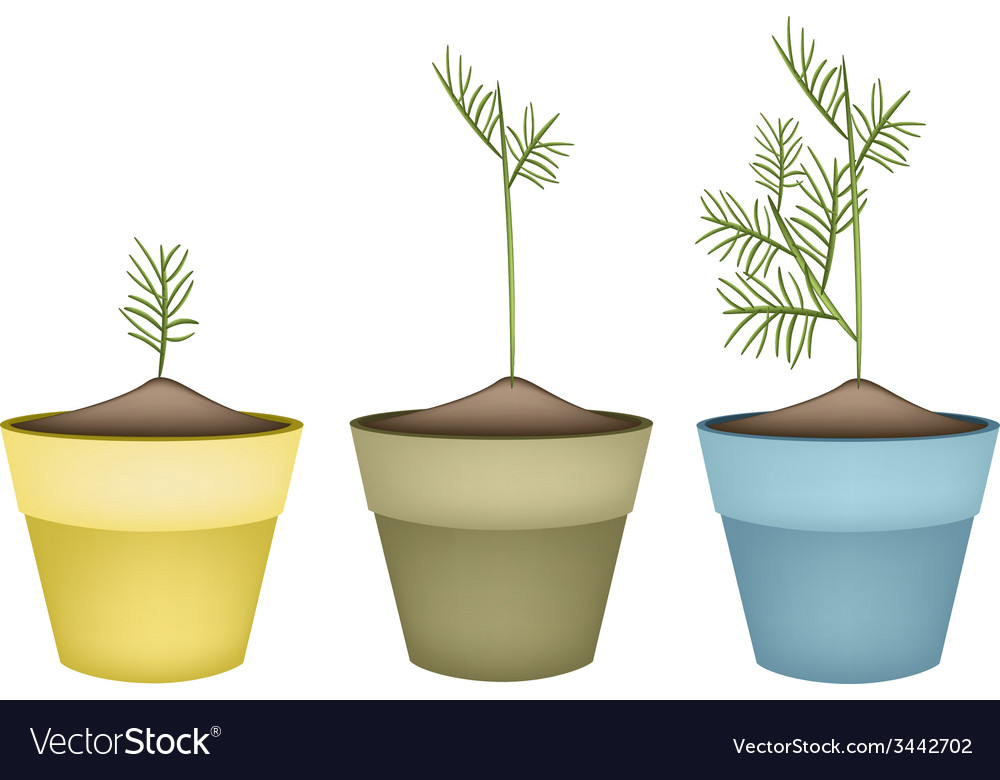 Three green dills in terracotta flower pots vector | Price: 1 Credit (USD $1)