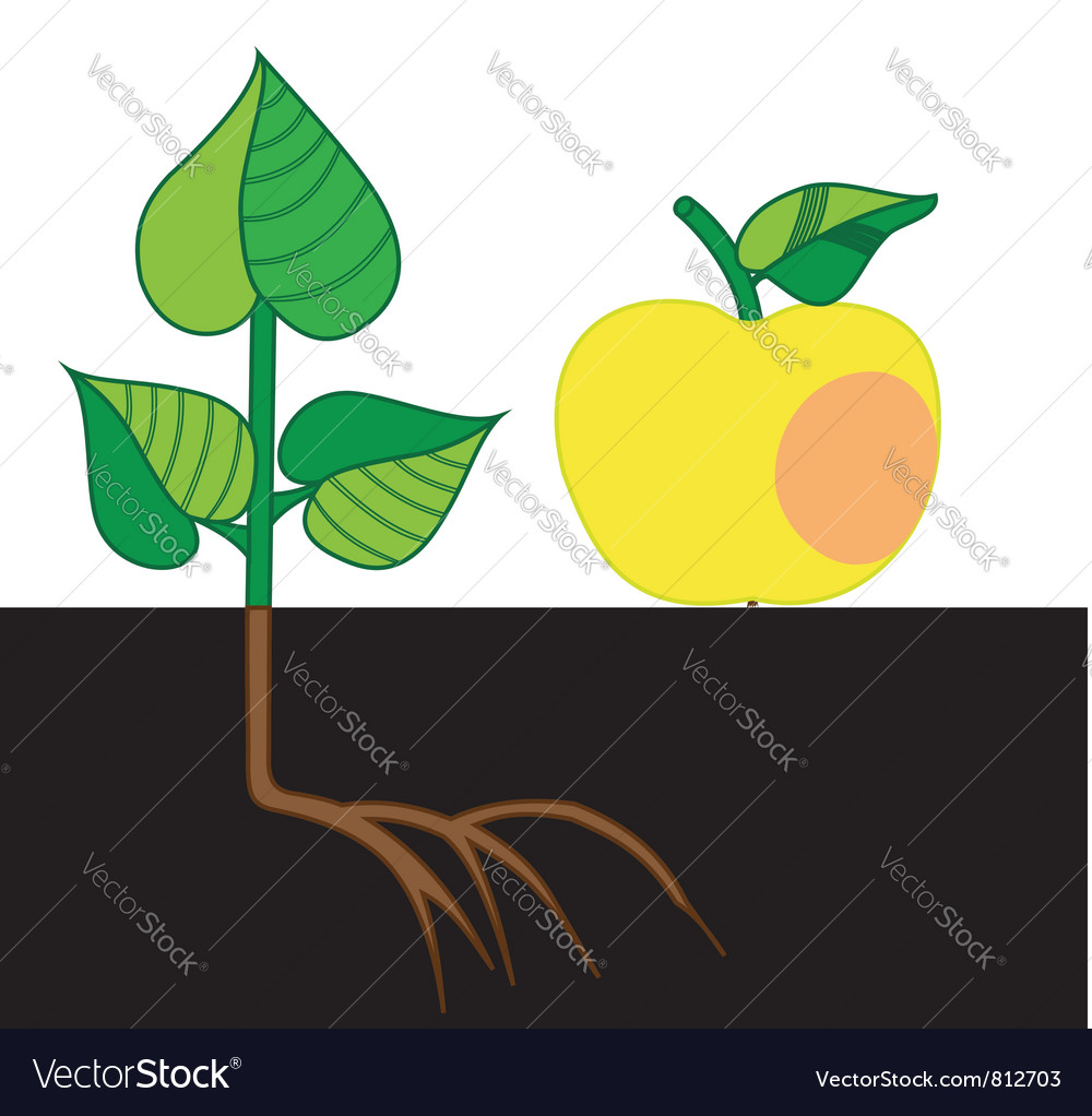 Apple and the hive vector | Price: 1 Credit (USD $1)
