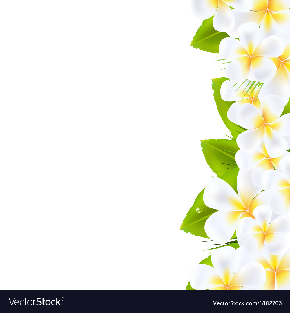 Frangipani flowers border vector | Price: 1 Credit (USD $1)