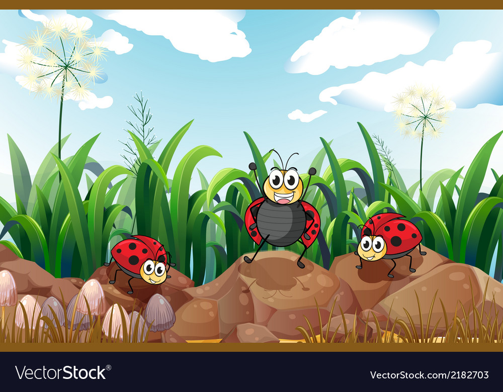 Three ladybugs above the rocks vector | Price: 1 Credit (USD $1)
