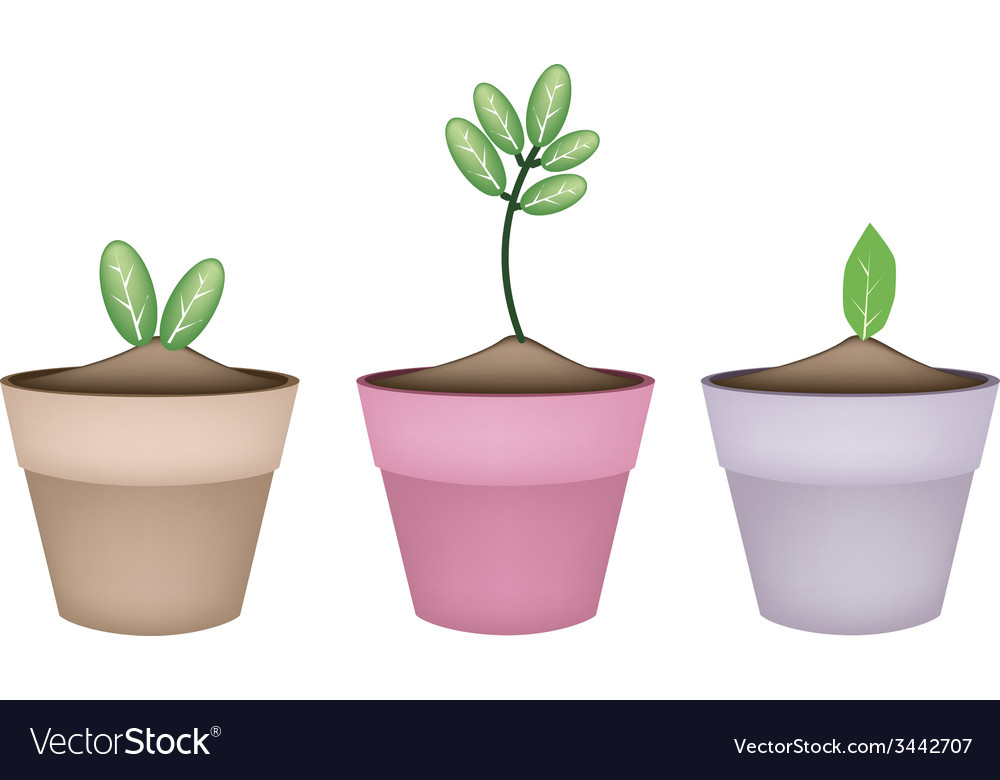 Fresh green trees in terracotta flower pots vector | Price: 1 Credit (USD $1)