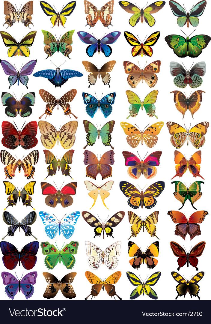 Butterflies vector | Price: 5 Credit (USD $5)