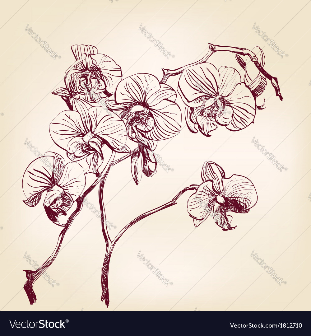 Floral orchid hand drawn vector | Price: 1 Credit (USD $1)