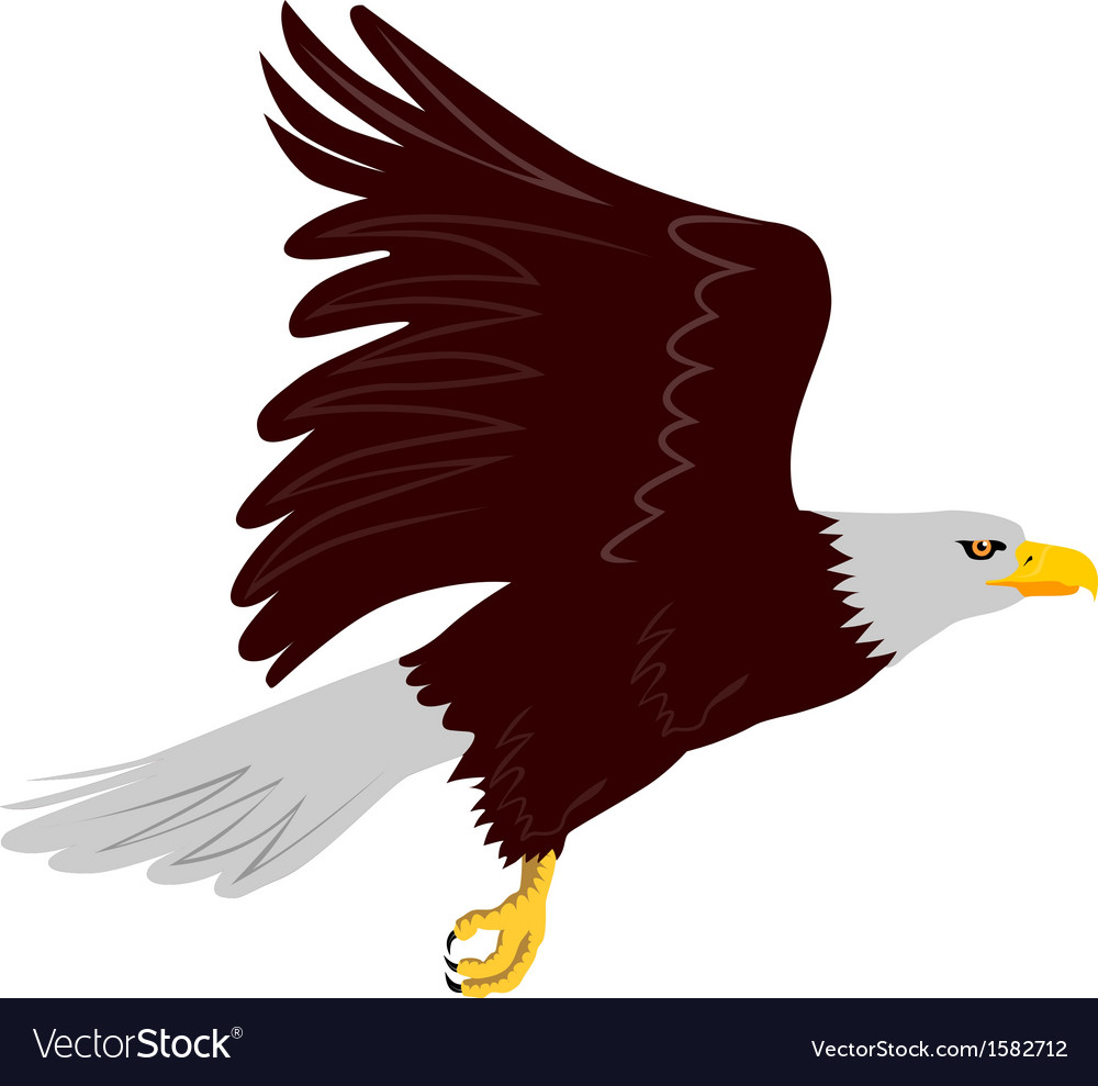 Bald eagle flying vector | Price: 1 Credit (USD $1)