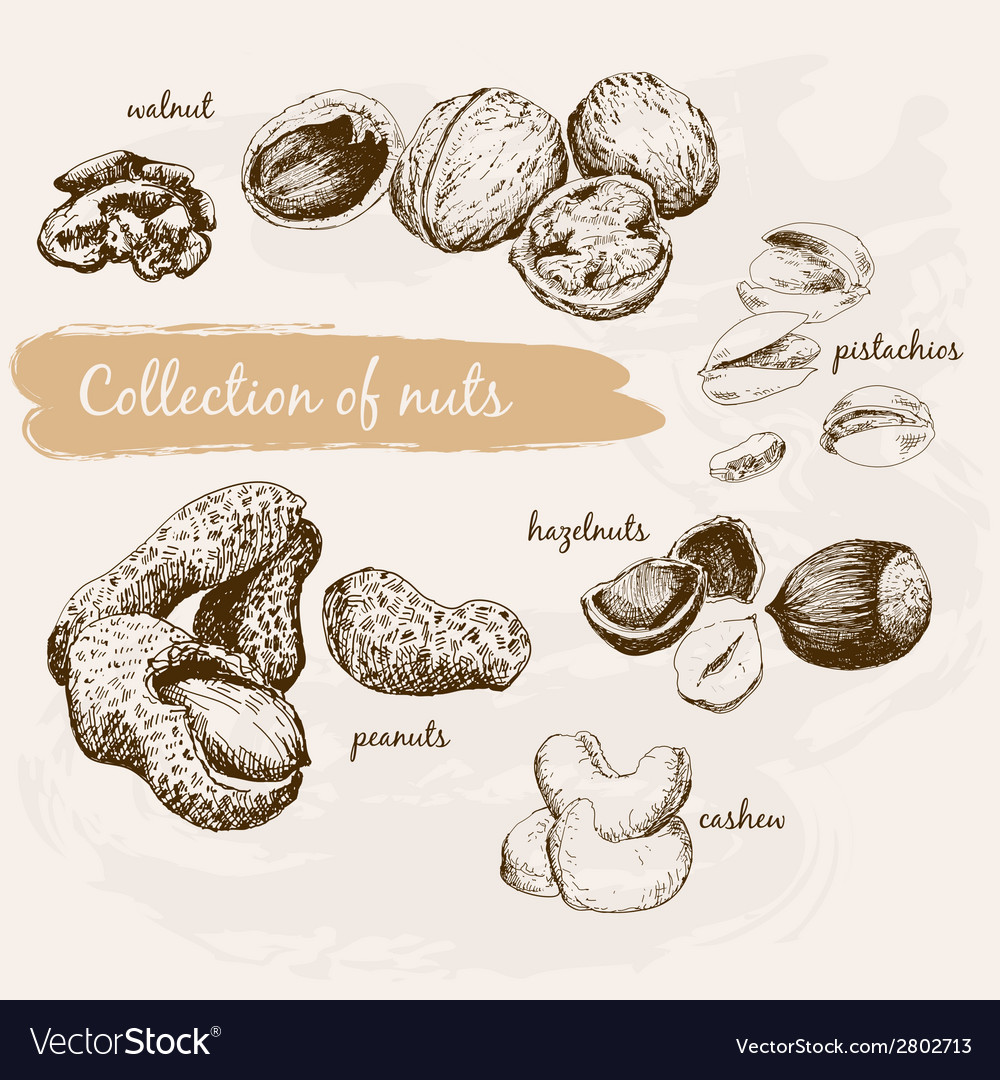 Collection of nuts vector | Price: 1 Credit (USD $1)