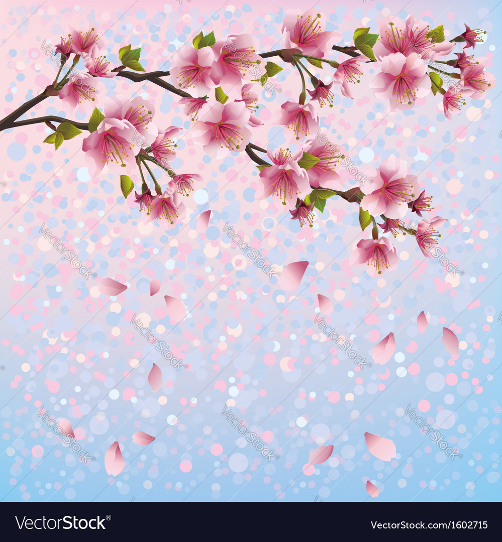 Spring background with sakura blossom cherry tree vector | Price: 1 Credit (USD $1)