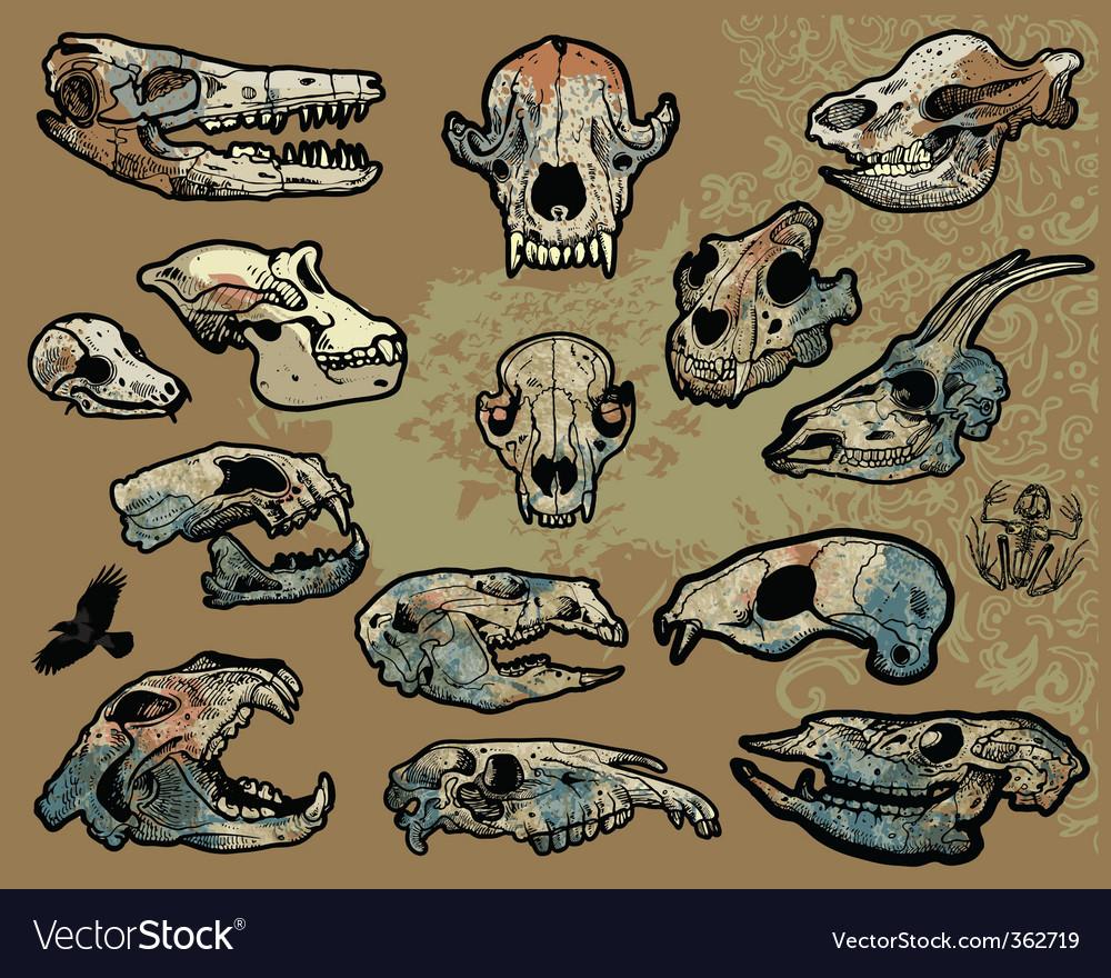Animal skulls vector | Price: 1 Credit (USD $1)