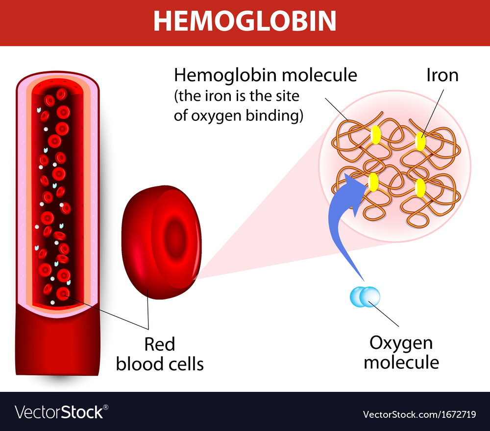 Molecule haemoglobin vector | Price: 1 Credit (USD $1)