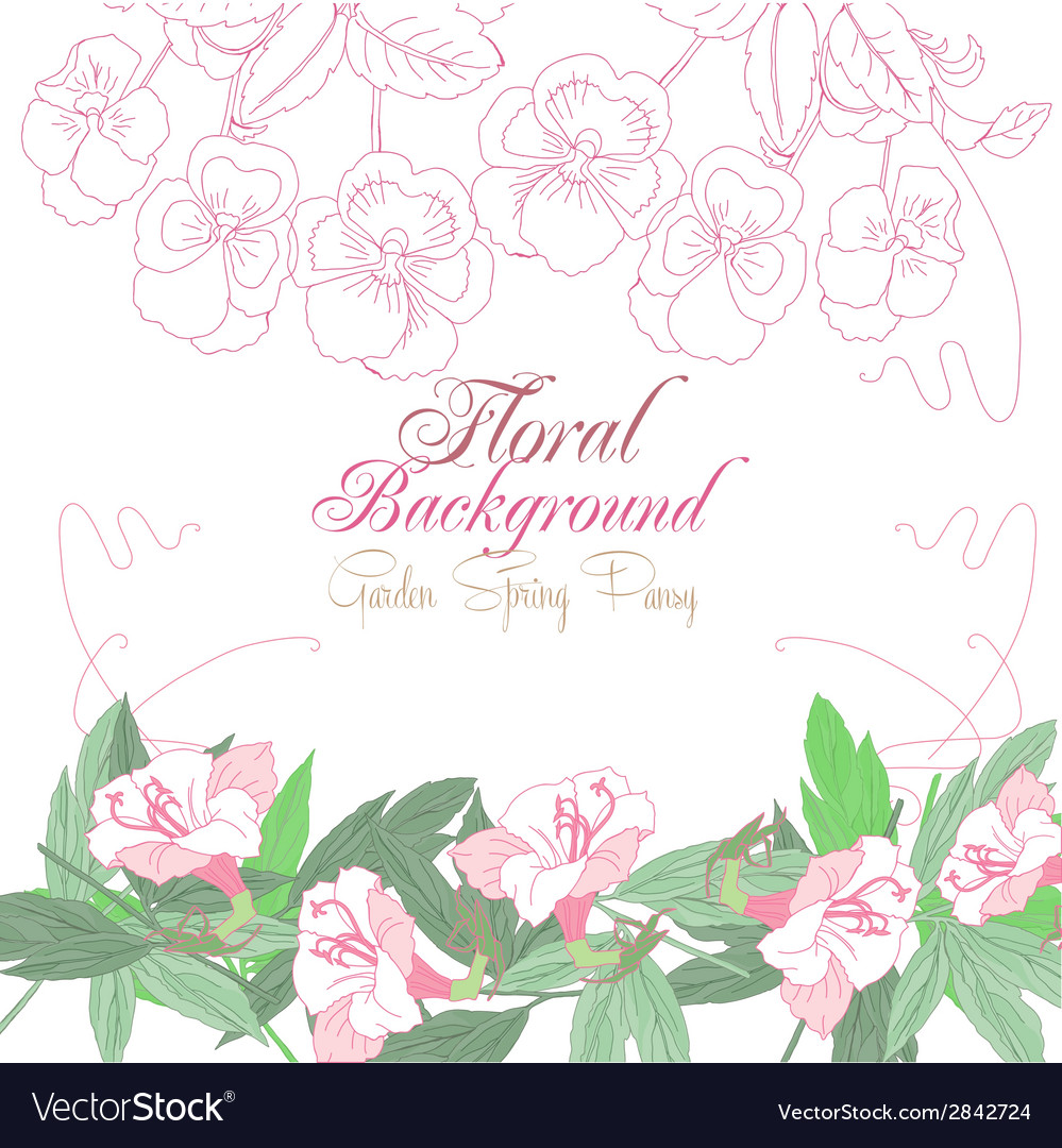 White floral background with pink pansies vector | Price: 1 Credit (USD $1)