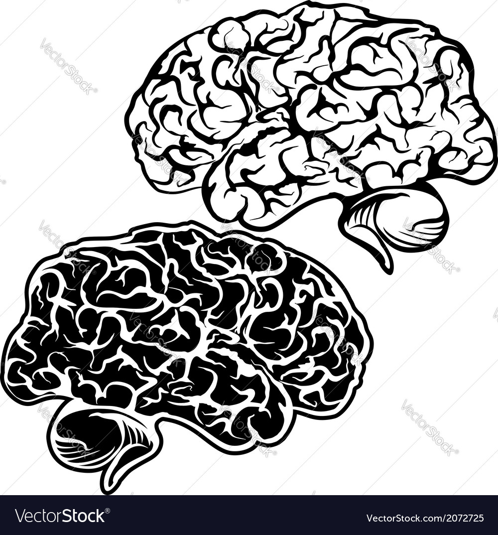 Human brain sketch cartoon vector | Price: 1 Credit (USD $1)