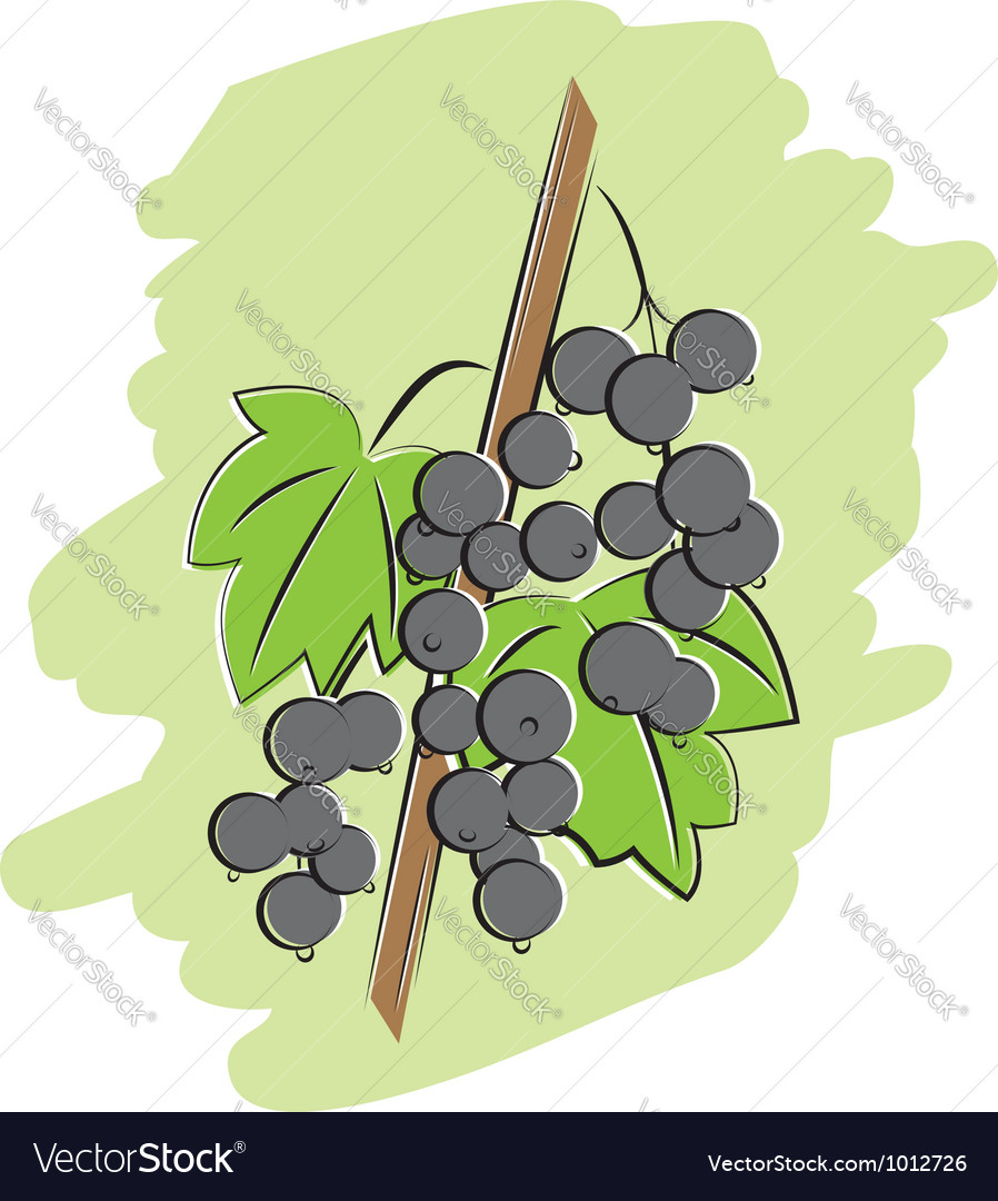 Bunch of black currant vector | Price: 1 Credit (USD $1)