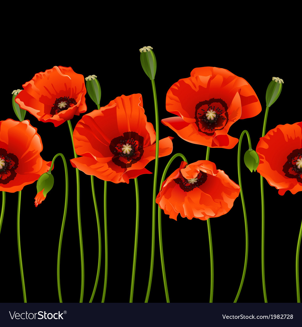 Red poppies in a row vector | Price: 1 Credit (USD $1)