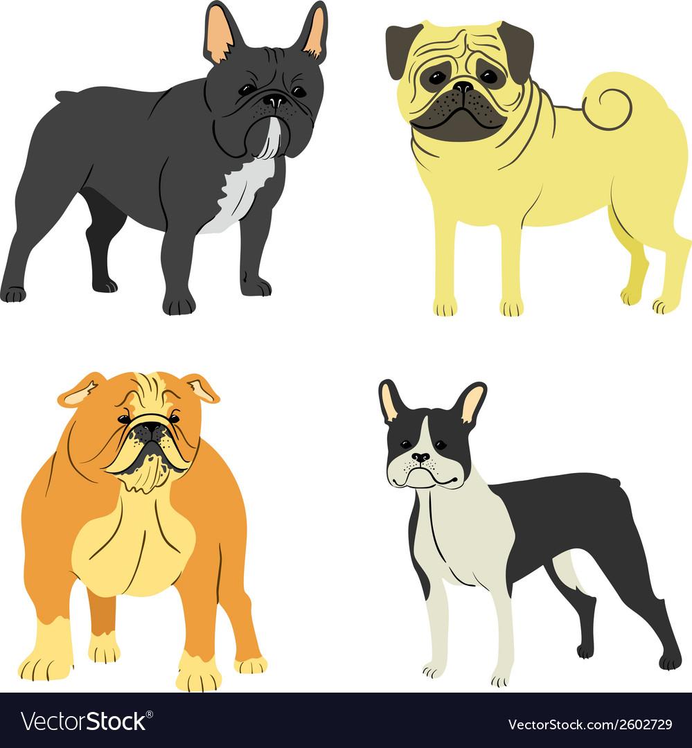 Dog breeds vector   Price: 1 Credit (USD $1)