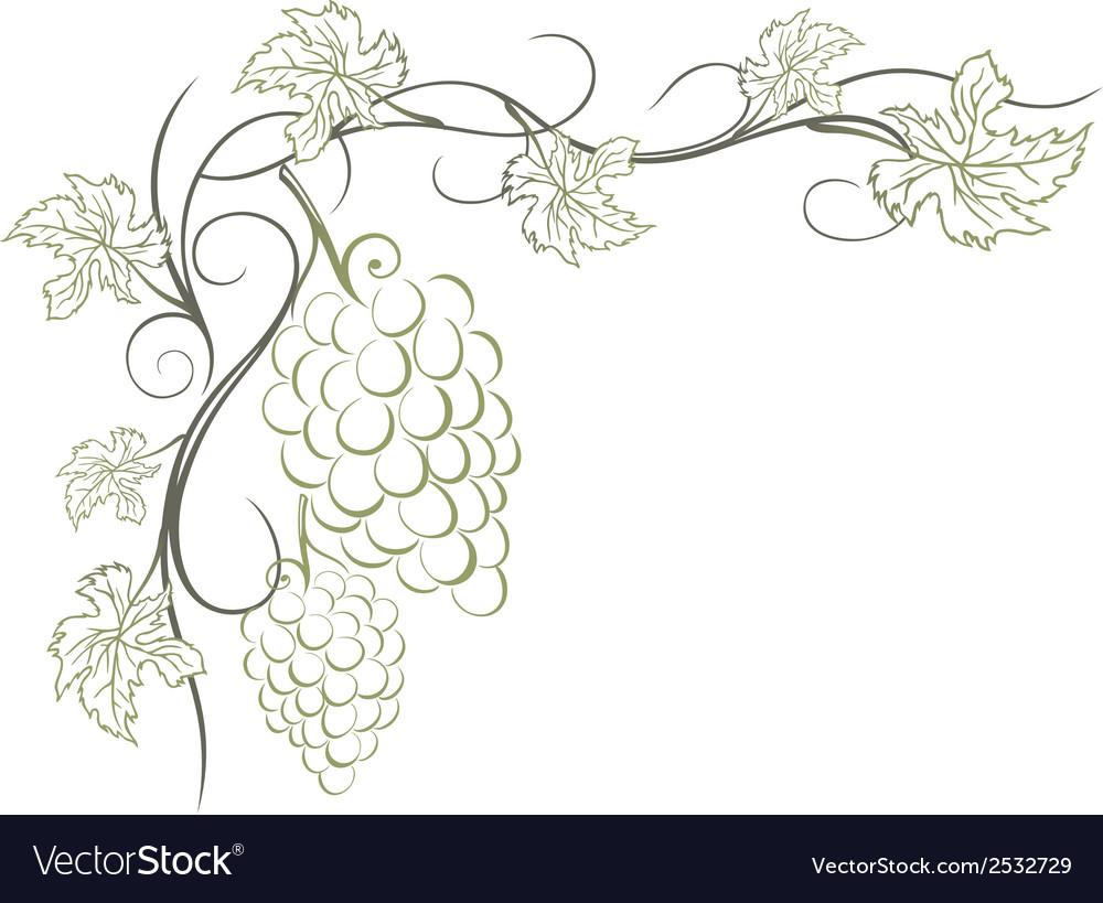 Grape vines vector   Price: 1 Credit (USD $1)