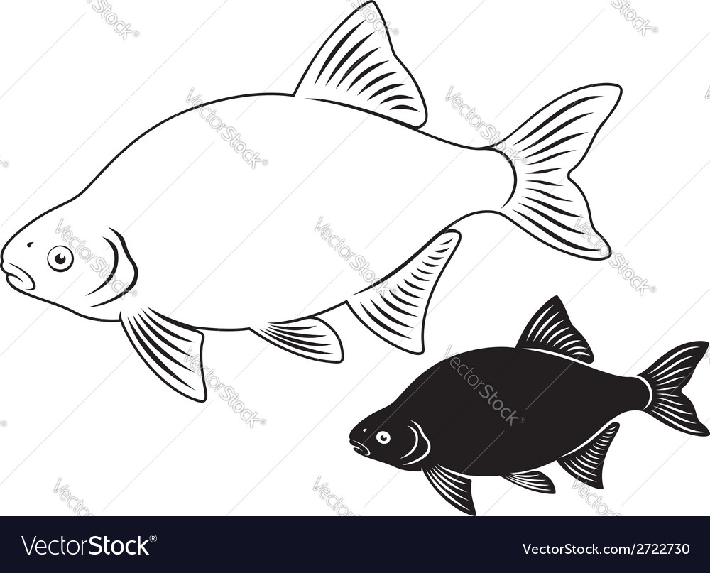 Bream fish vector | Price: 1 Credit (USD $1)