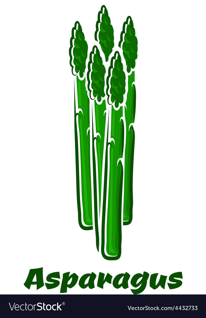 Green asparagus vegetable spears on white vector   Price: 1 Credit (USD $1)