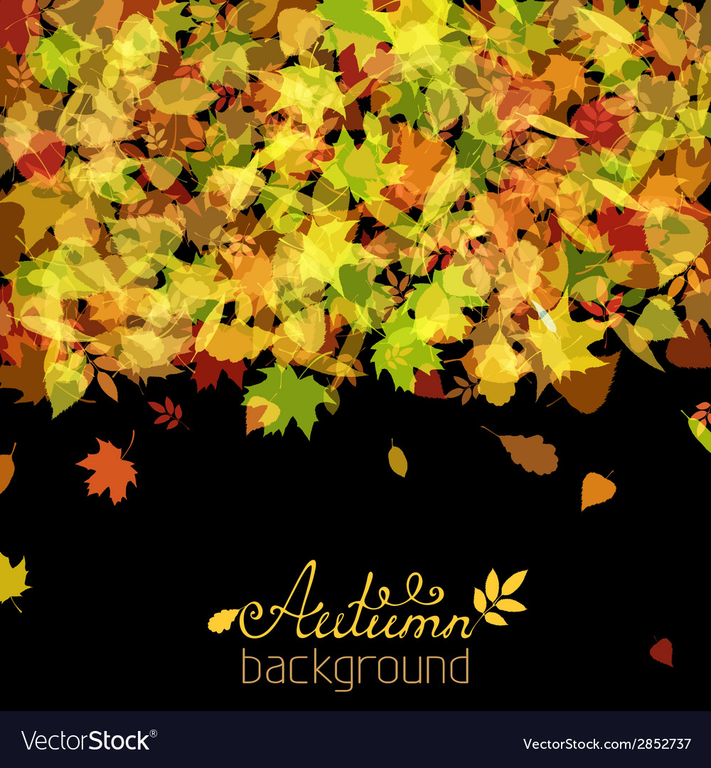 Set of various autumn leaves silhouettes on black vector | Price: 1 Credit (USD $1)