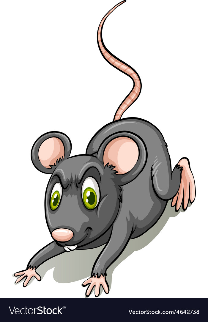Black rat vector | Price: 1 Credit (USD $1)