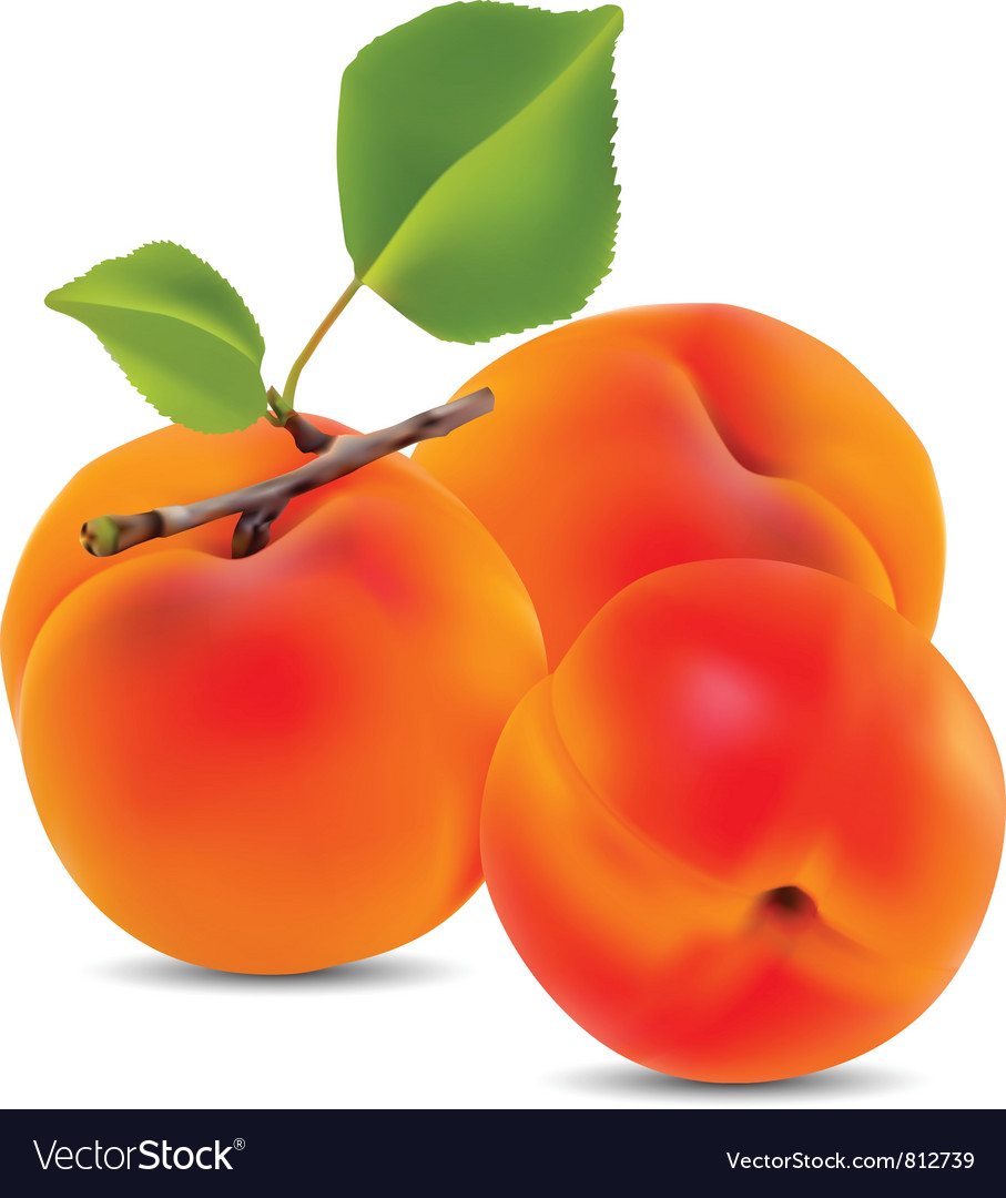 Apricots vector | Price: 1 Credit (USD $1)