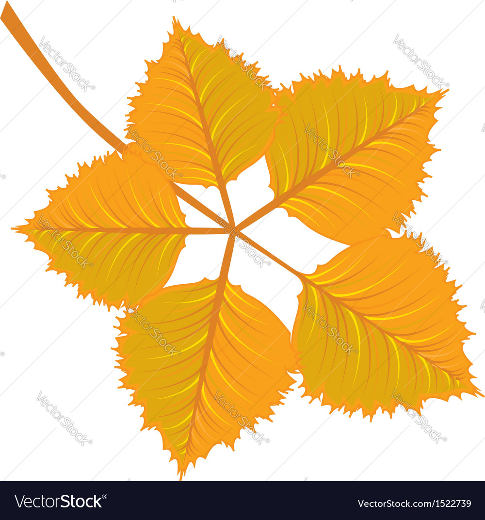 Branch with yellow autumn leaves vector   Price: 1 Credit (USD $1)
