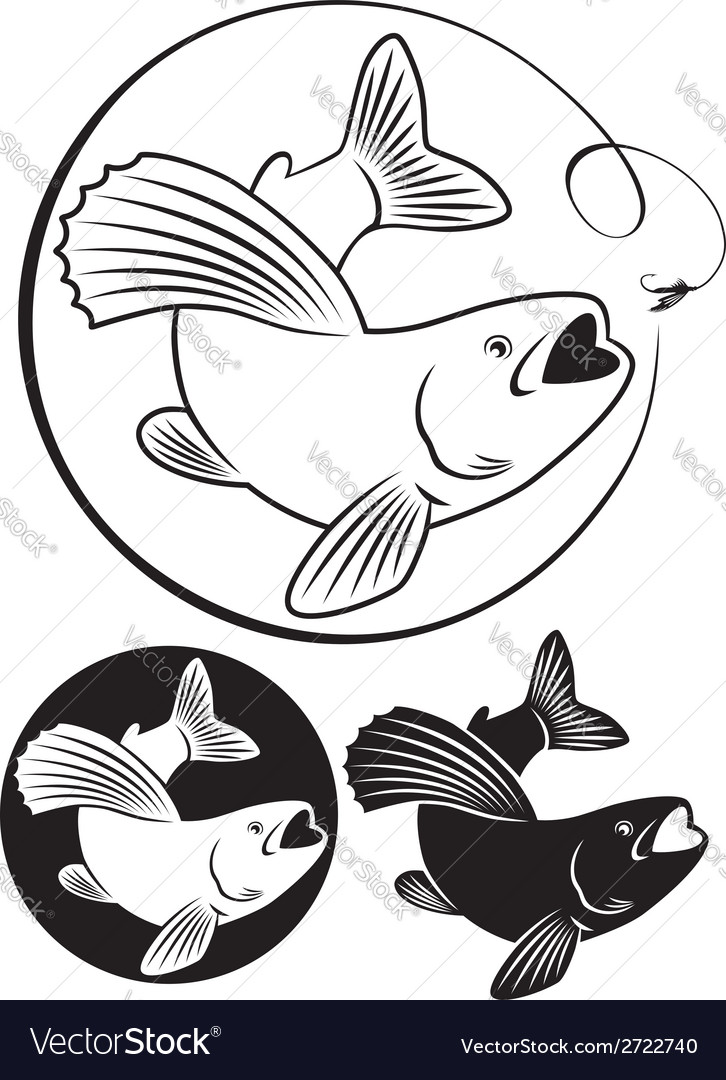 Fish grayling vector | Price: 1 Credit (USD $1)