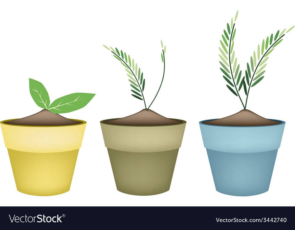 Lovely green trees in terracotta flower pots vector | Price: 1 Credit (USD $1)