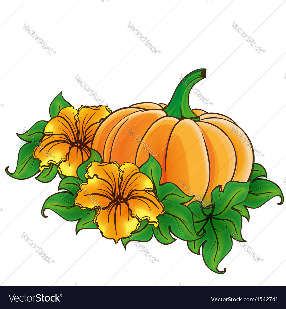 Pumpkin and flowers isolated vector | Price: 1 Credit (USD $1)