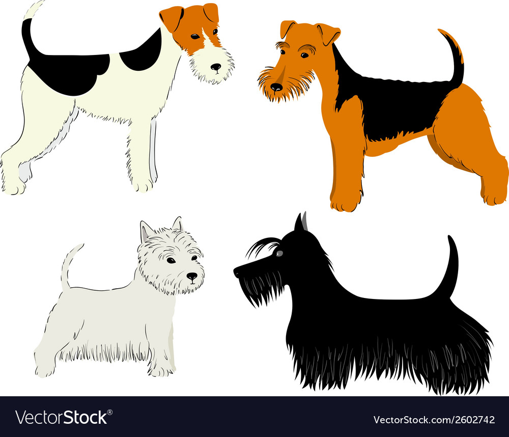 Dogs breeds vector | Price: 1 Credit (USD $1)