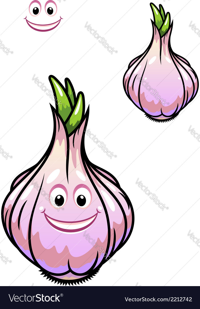 Sprouting fresh garlic bulb vector | Price: 1 Credit (USD $1)