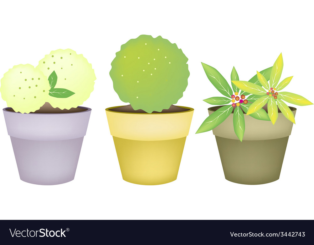 Trees and plants in terracotta flower pots vector | Price: 1 Credit (USD $1)