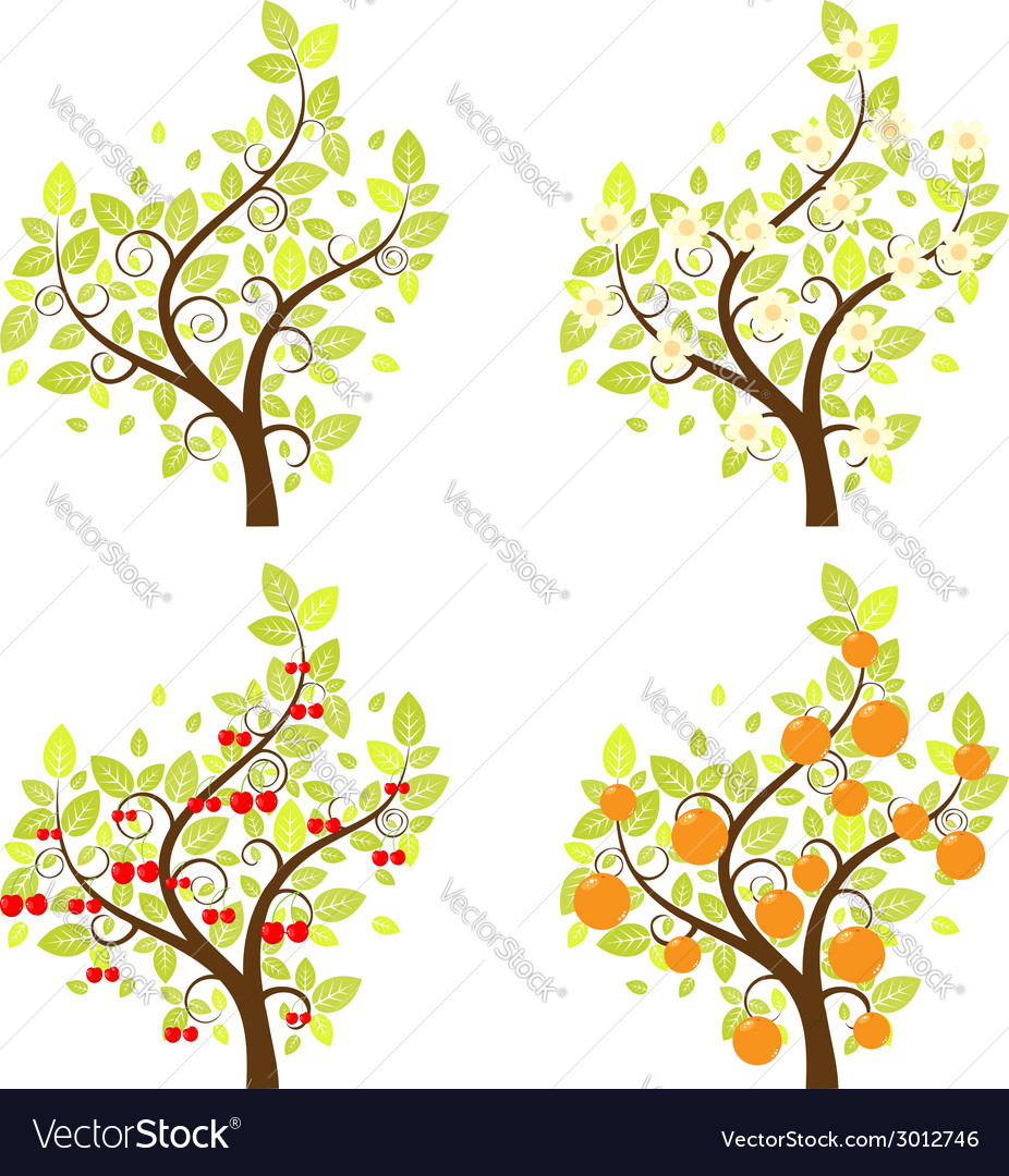 Stylized fruit trees vector | Price: 1 Credit (USD $1)