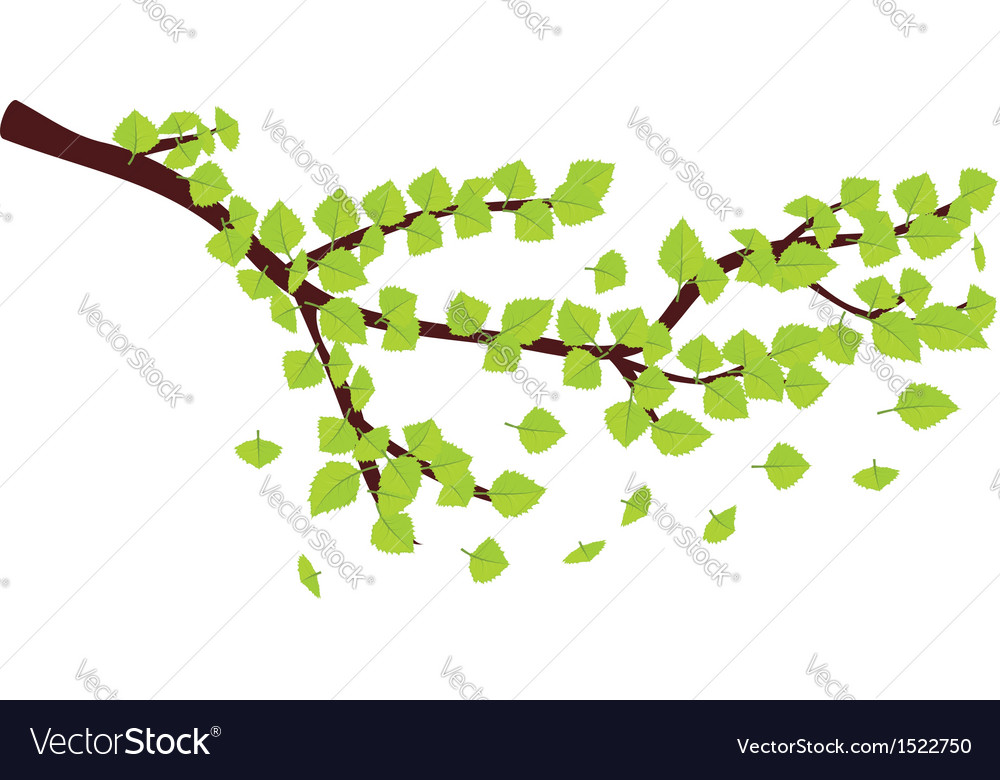 Green leaves on brunch vector | Price: 1 Credit (USD $1)
