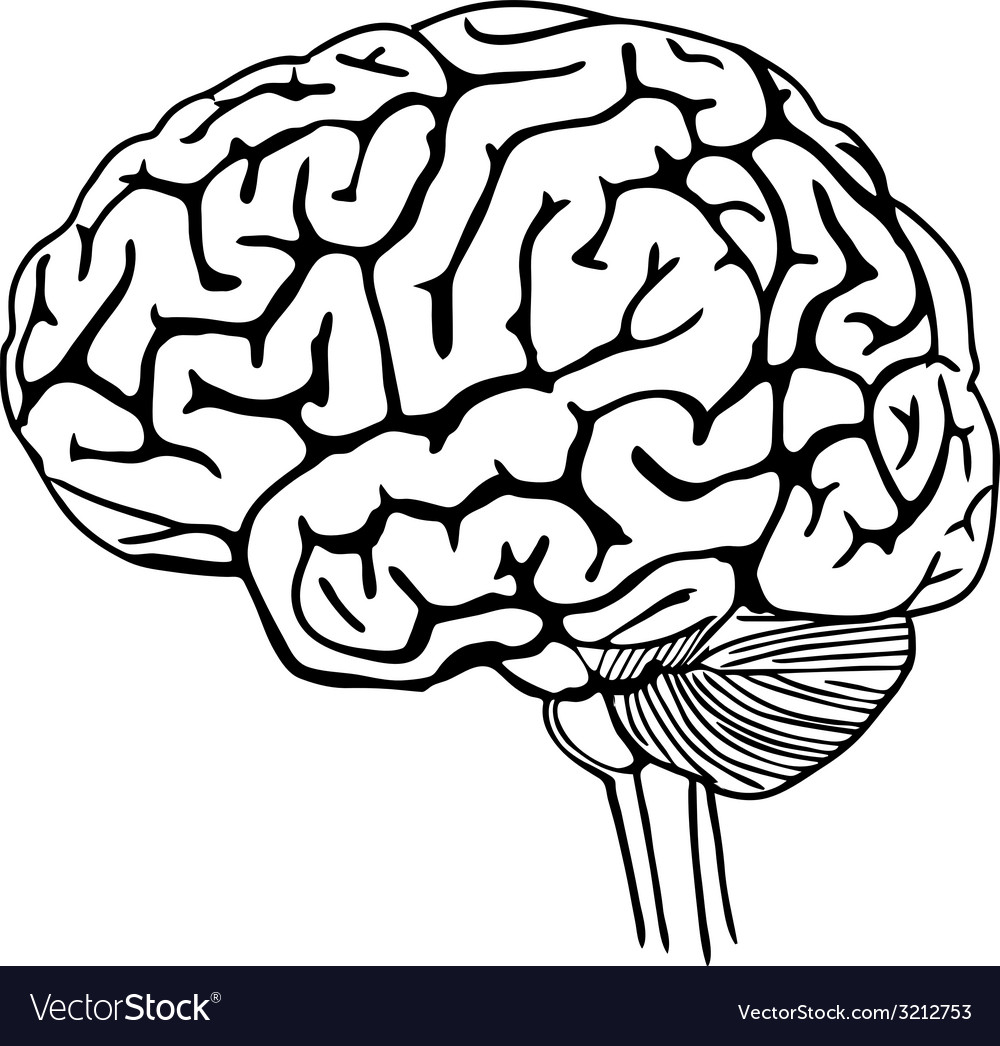 Brain outline vector | Price: 1 Credit (USD $1)