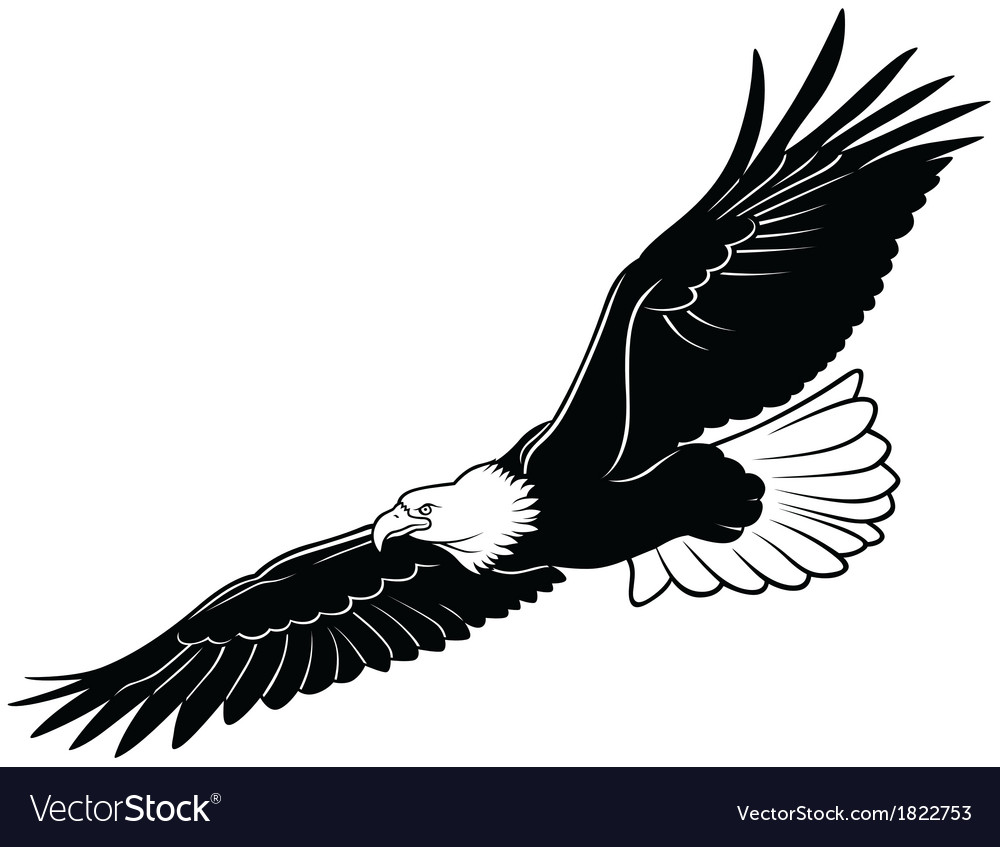 Flying bald eagle vector | Price: 1 Credit (USD $1)