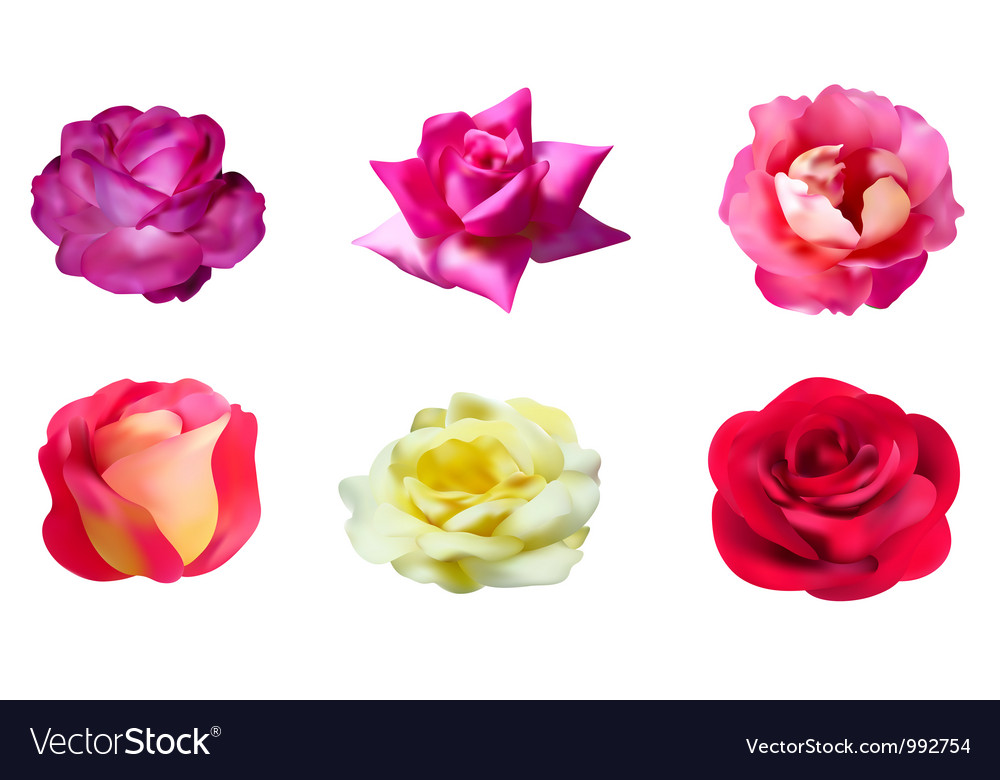 Rose flowers vector | Price: 1 Credit (USD $1)