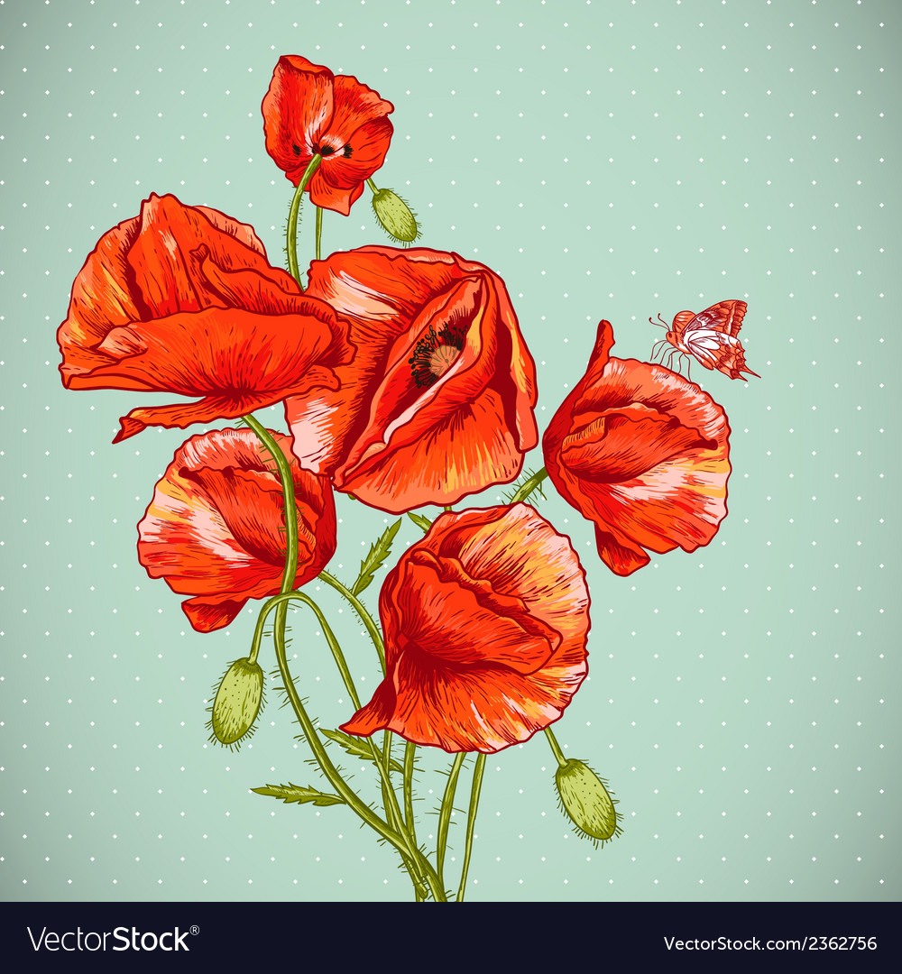 Bunch of beautiful red poppy vector | Price: 1 Credit (USD $1)