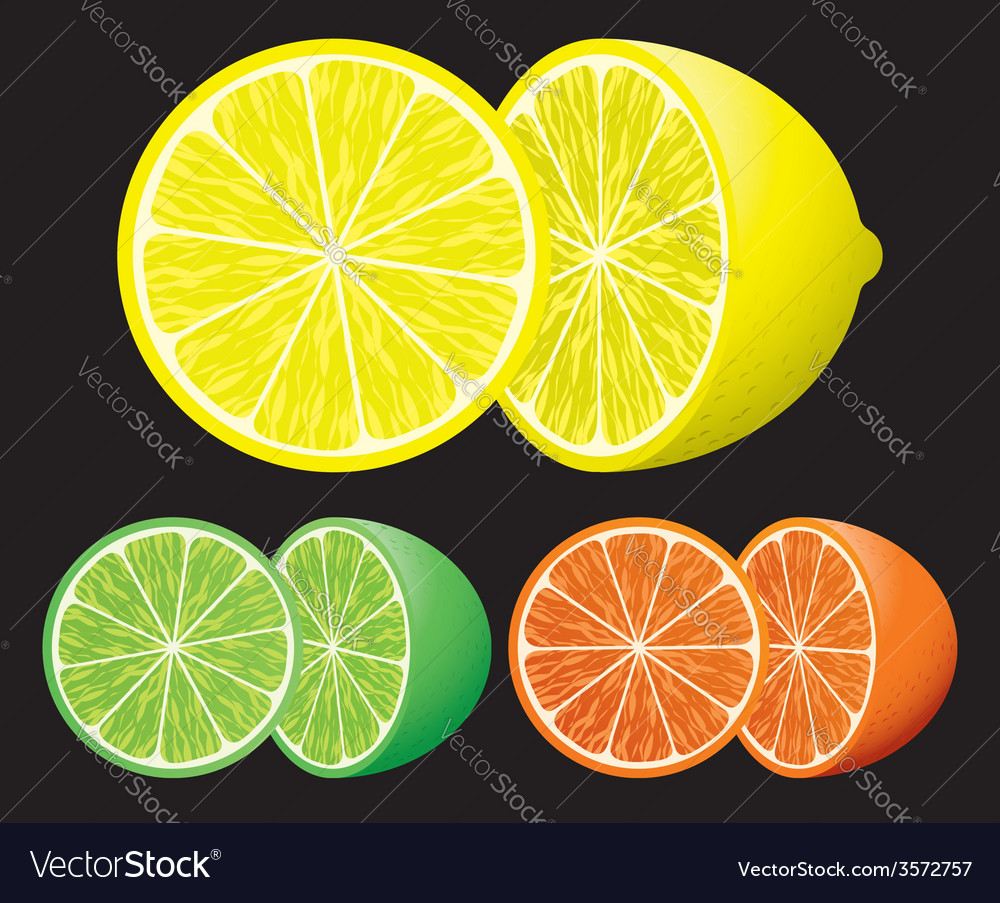 Set of citrus fruits vector | Price: 1 Credit (USD $1)