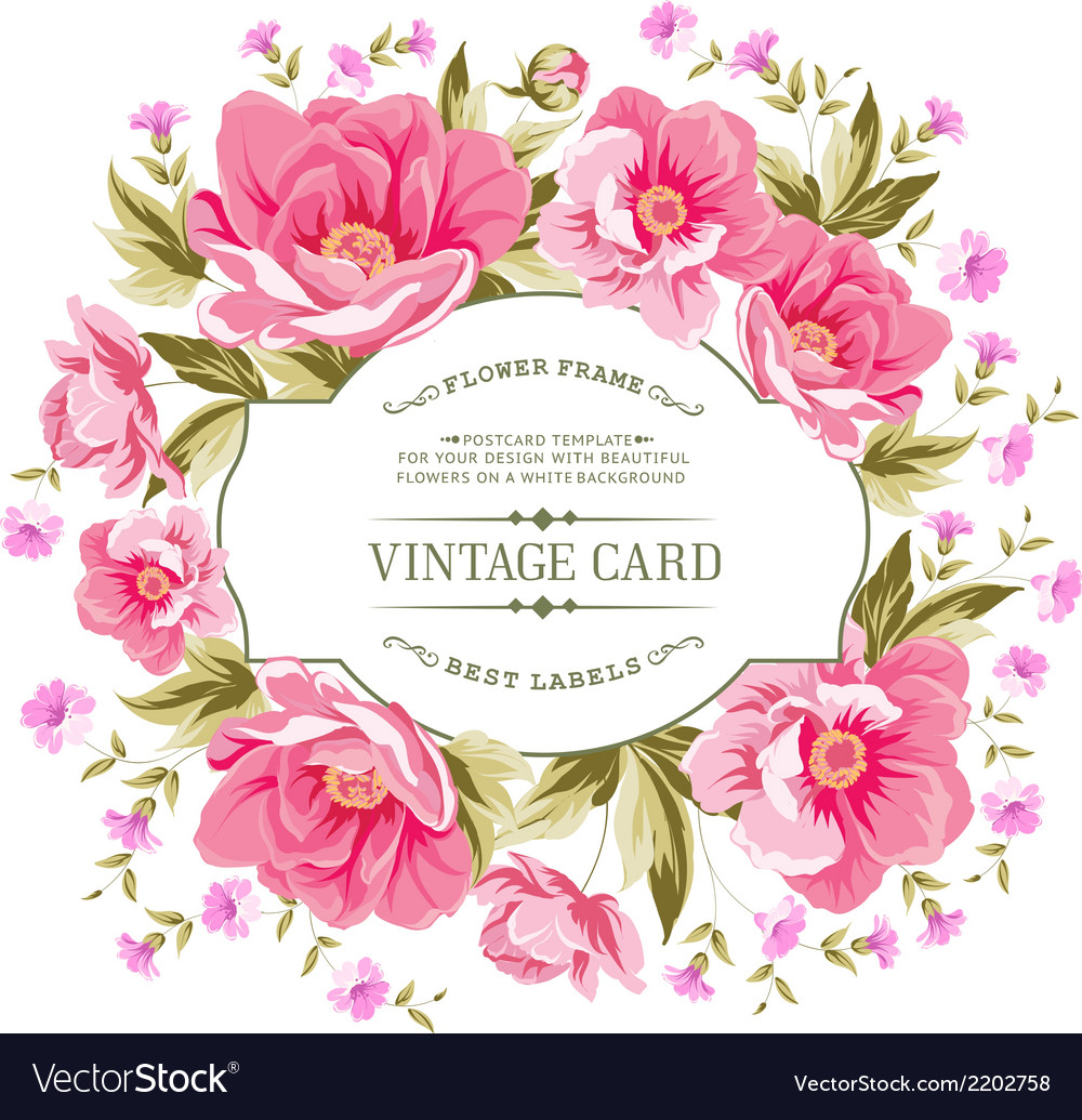 Luxurious color peony pattern vector | Price: 1 Credit (USD $1)